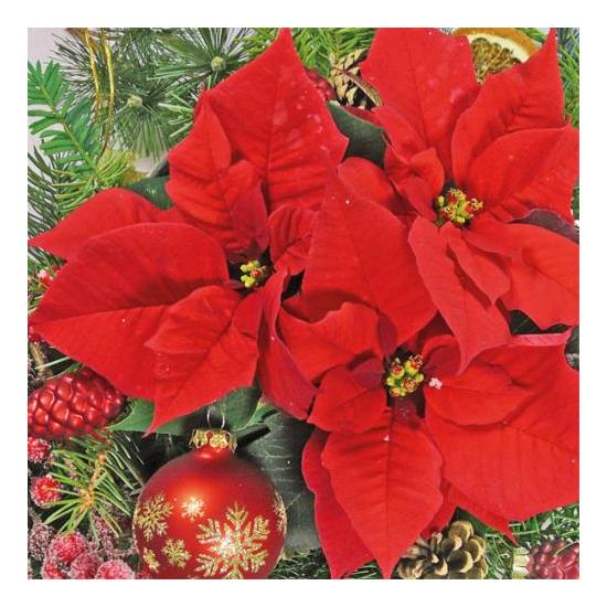 Red Poinsettia papírszalvéta 33x33 cm, 20 db-os